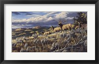Framed King Of The Hill - Elk