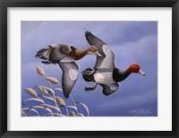 Framed 1986 Redhead Ducks