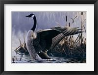 Framed 1992 Canada Goose