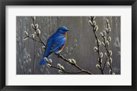 Framed Signals Of Spring - Eastern Bluebird