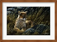 Framed Cougar In The Grass