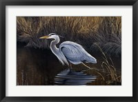 Framed Making Strides - Great Blue Heron