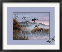 Ducks In Flight 2 Framed Print