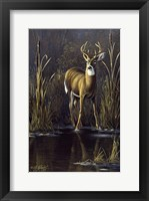 Framed Whitetail Buck