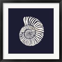 Framed Contemporary Coastal Shell II