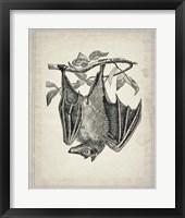 Framed Bats 4