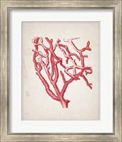 Framed Red Coral 2