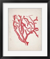 Framed Red Coral 2