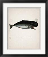 Framed Whale 3