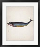 Whale 4 Framed Print