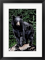 Framed Black Bear 4