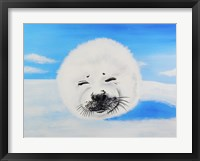 Framed Harp Seal