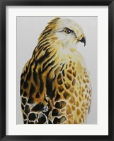 Framed Hawk
