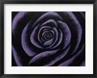 Framed Purple Rose