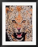 Framed Prowl