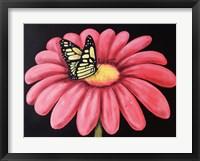 Framed Butterfly's Snack