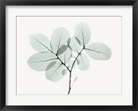 Framed Myrtle Tree