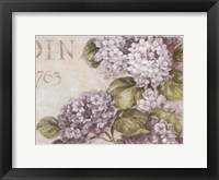 Framed Antiqued Hydrangeas II
