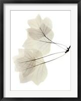Framed Tulip Tree