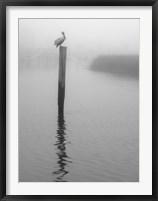 Framed On Pelican Marsh