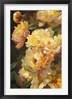 Peonies for Springtime Framed Print