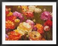 Ranunculus Garden Framed Print