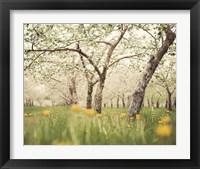 Framed Quiet Orchard