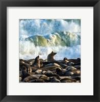 Framed Cape Fur Seals, Cape Cross, Namibia