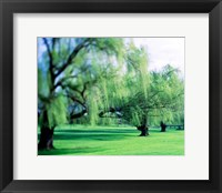 Framed Willow Trees