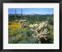 Framed Arizona, Organ Pipe Cactus National Monument