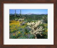 Framed Arizona, Organ Pipe Cactus National Monument