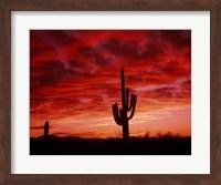 Framed Organ Pipe Cactus State Park, AZ
