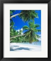 Framed Mahe Seychelles