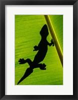 Framed Leopard Gecko, Tortuguero, Costa Rica