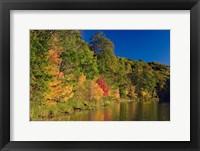Framed Pillsbury State Forest, Minnesota