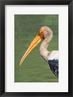 Framed Painted Stork, Bandhavgarh National Park, India