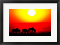 Framed Wildebeests, Etosha National Park, Namibia