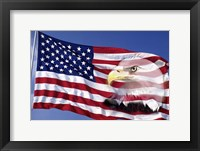 Framed Bald Eagle on Flag