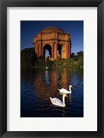 Framed Swans and Palace of Fine Arts