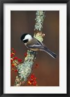 Framed Black-capped Chickadee Bird