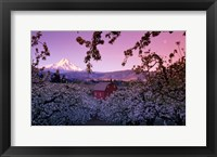 Framed Apple Trees in Oregon