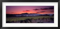 Framed Vineyard At Sunset, Napa Valley, California