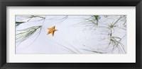 Framed Starfish, Gulf of Mexico