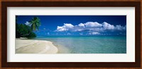 Framed Palm Tree in the French Polynesia