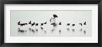 Framed Flamingos, Lake Manyara, Tanzania
