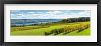 Framed Glenora Vineyard, Seneca Lake, Finger Lakes, New York State