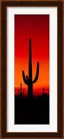 Framed Silhouette of Saguaro Cactus, Arizona