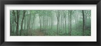 Framed Forest Niigata Martsunoyama-cho, Japan