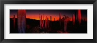 Framed Organ Pipe National Park AZ