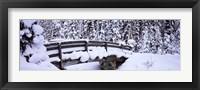 Framed Snowy Bridge in Banff National Park, Alberta, Canada